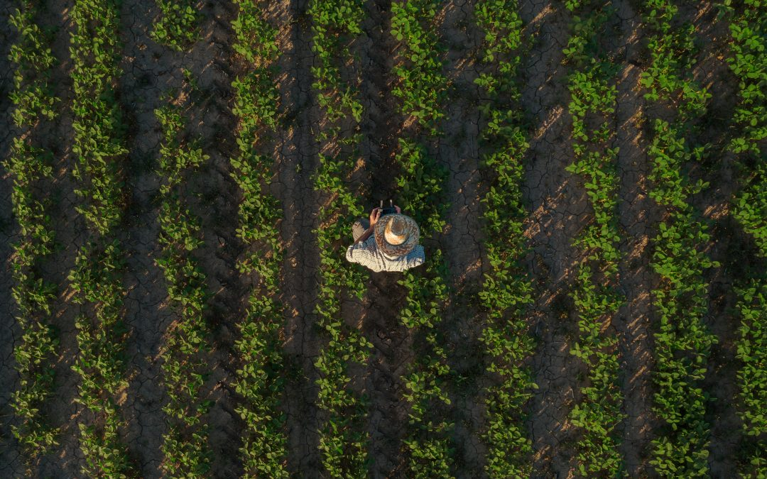 Research and Development Tax Credits in Agriculture